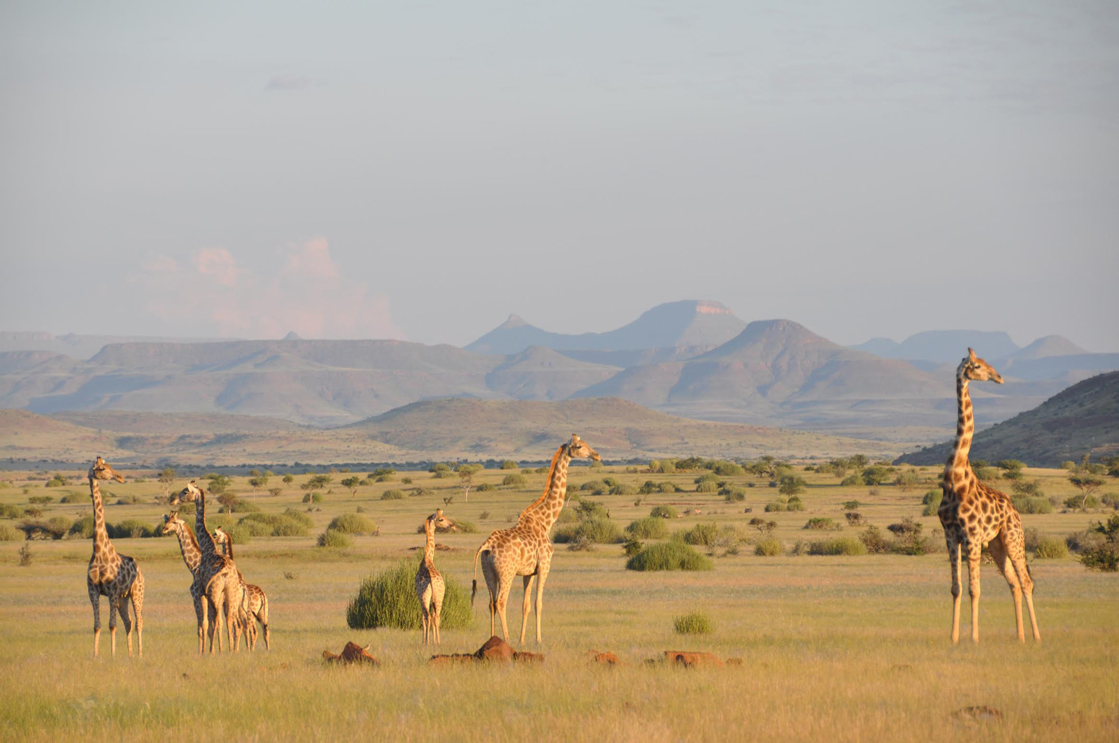 A journey with giraffes - Africa Geographic Magazine