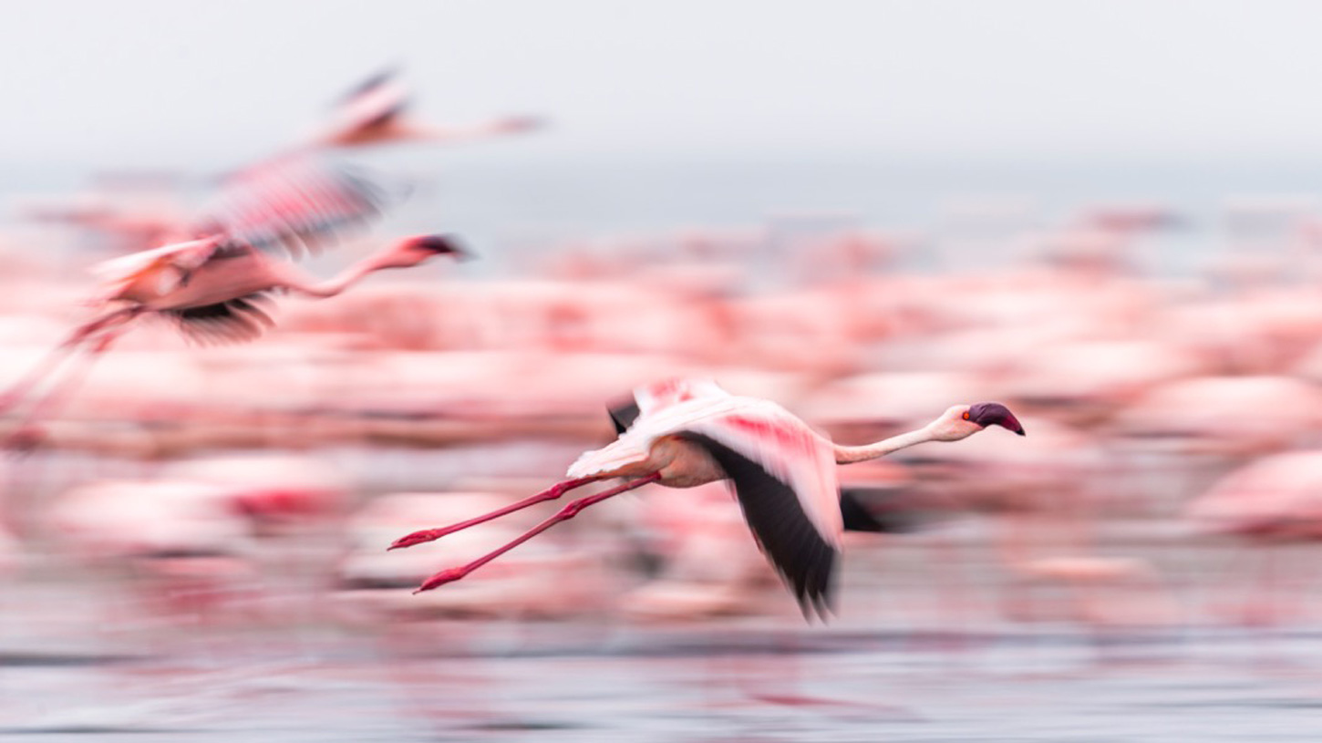 "Flames of pink in Walvis Bay, Namibia ©Anna-Mart Kruger, <a href=""http://www.icapturephotosafaris.com/"" target=""_blank"">iCapture Photo Safaris<a/>"