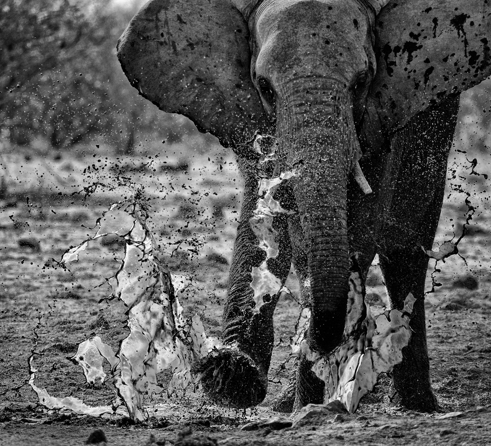 """""""Just for the fun of it"""" - elephant in Etosha National Park ©Chris Fearnehough"""