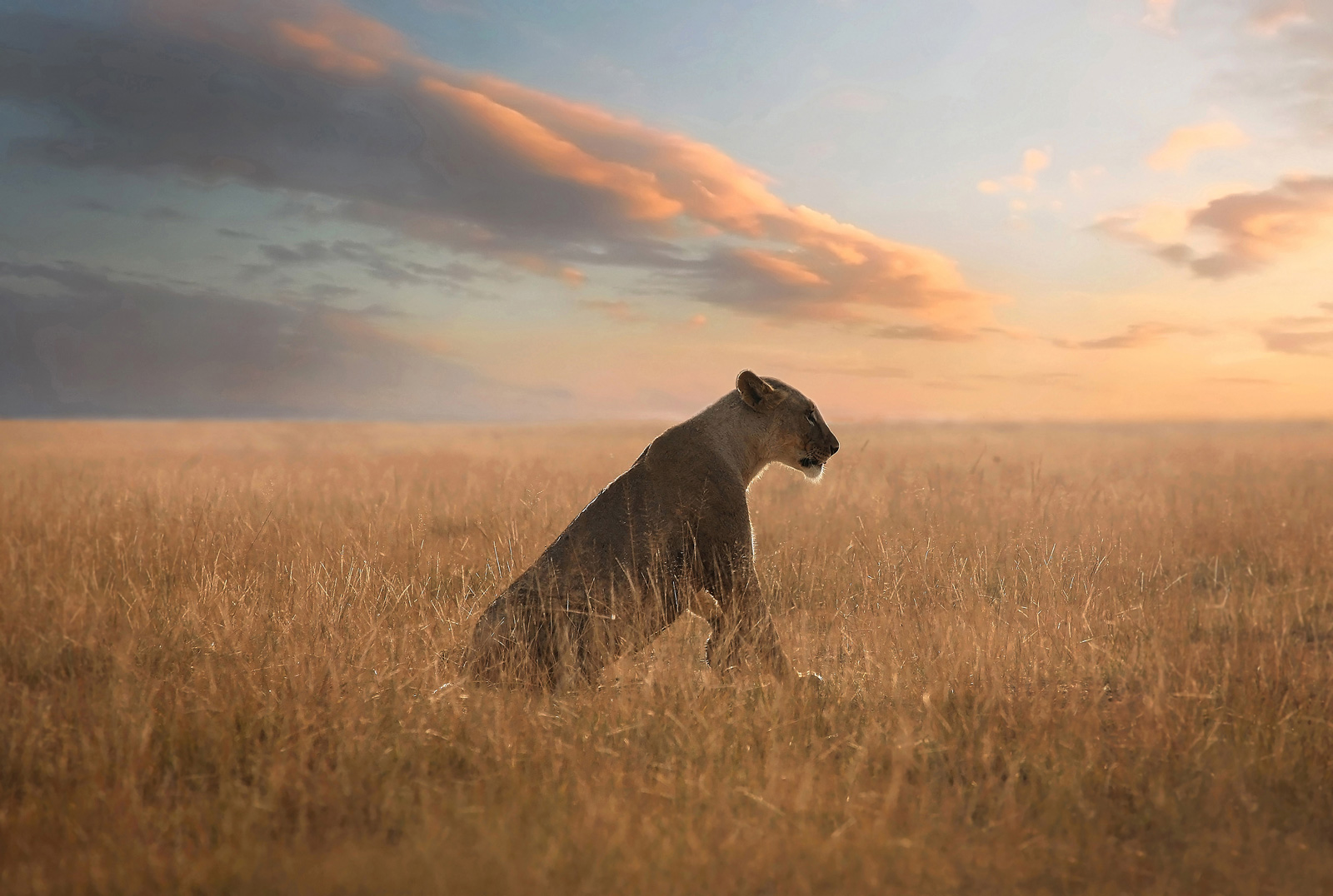 """The future of lions in Africa is in our hands © <a href=""""http://bjornpersson.nu/"""" target=""""_blank"""">Bjorn Persson</a>"""
