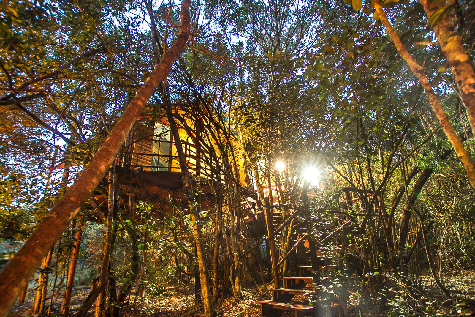 "A treehouse in the evening at <a href=""http://www.teniquatreetops.co.za"" target=""_blank"">Teniqua Treetops</a> ©Phil Per"