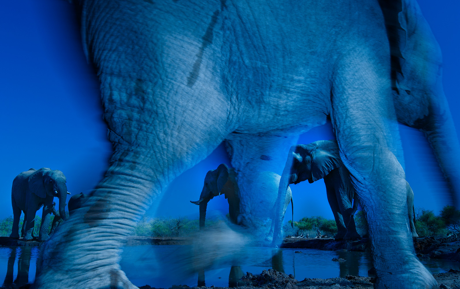 """The image that won Greg the coveted 'Wildlife Photographer of the Year' award in 2013 © <a href=""""https://www.gregdutoit.com/"""" target=""""_blank"""">Greg du Toit</a>"""