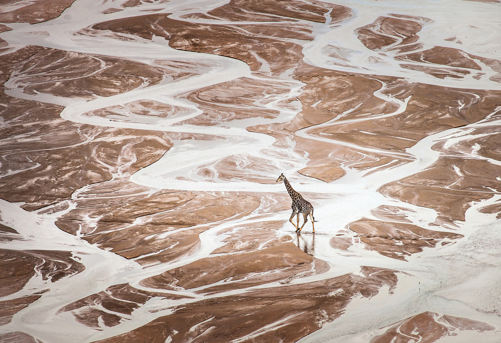 "A giraffe ambles across the riverbed in Hluhluwe-Imfolozi Game Reserve ©<a href=""https://www.lovewildafrica.com/"" target=""_blank"">Scott Ramsay</a>"