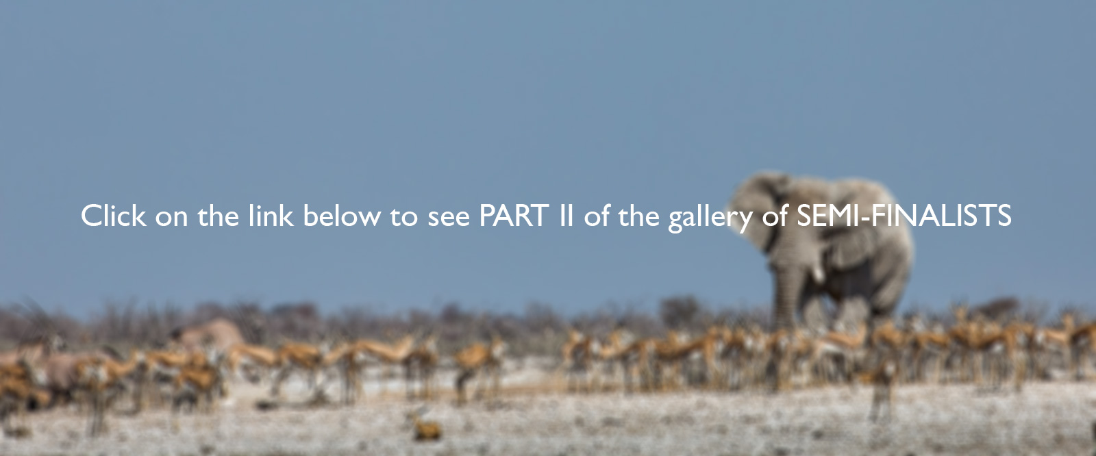 "Click <a href=""http://magazine.africageographic.com/weekly/issue-150/photographer-year-2017-semi-finalists-part-2/""target=""_blank"">here to see <b>PART II</b> of the gallery</a>"