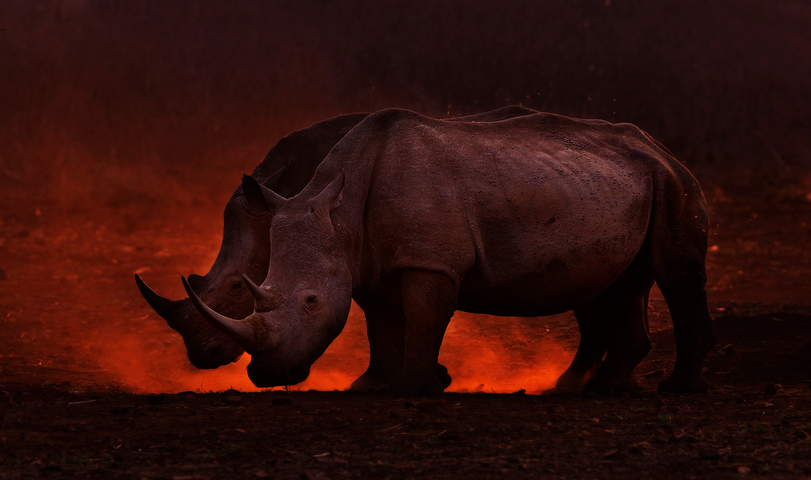 """""""Scorched earth"""" in Zimanga Game Reserve, South Africa ©Prelena Soma Owen"""