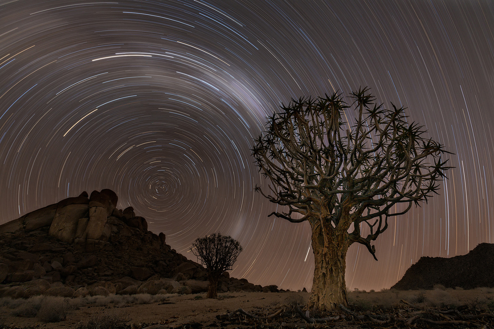 Quiver trees in the Richtersveld, South Africa ©Willem Kruger