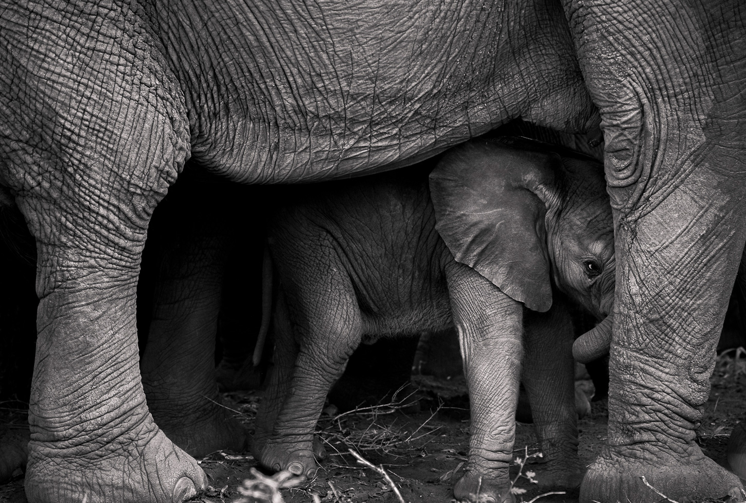 """""""Unsteady but secure"""" in Skukuza, Kruger National Park, South Africa ©Thinus Schoeman"""