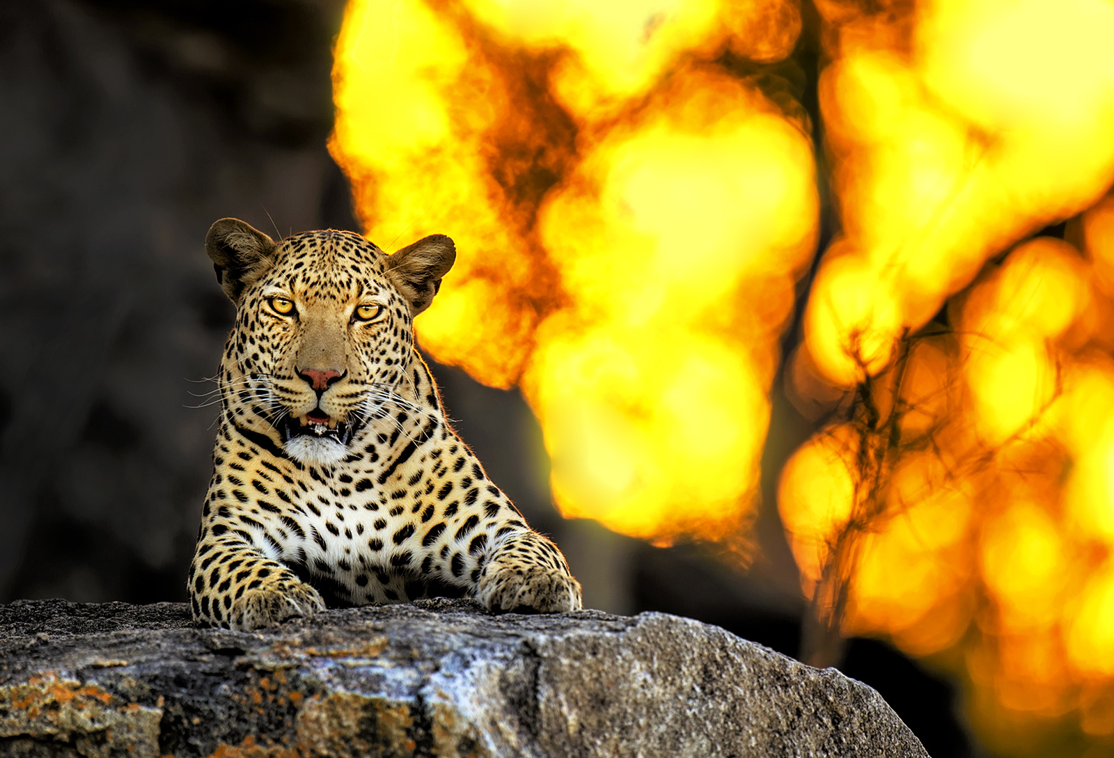 """Enflamed"" in Kruger National Park, South Africa ©Licnia Machado"