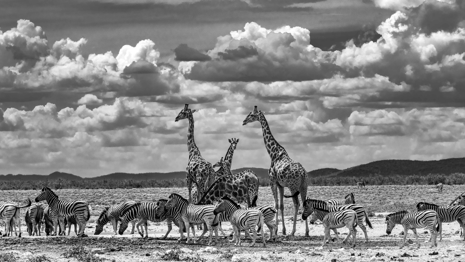 """""""Stripes and spots"""" in Namibia ©Andrea Galli"""