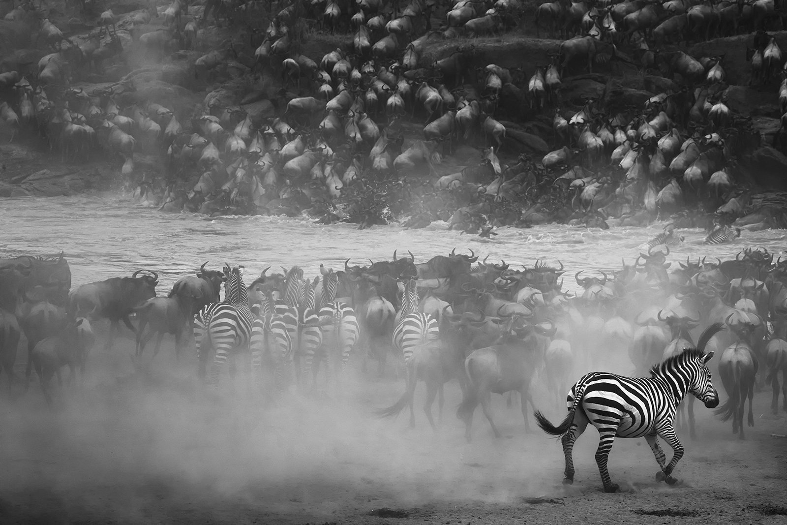 """The great migration"" in Maasai Mara National Park, Kenya ©Panos Laskarakis"