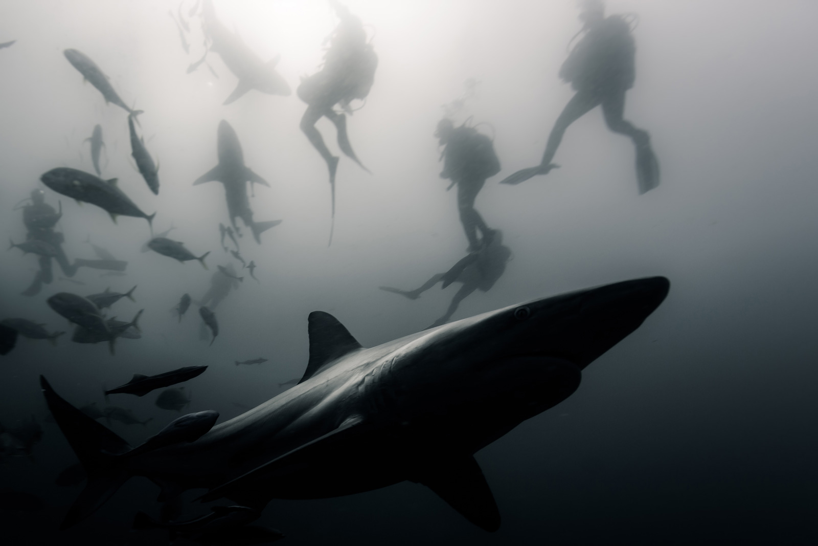 """Shadows in the water"" at the Aliwal Shoal, South Africa ©Christophe Lapeze"