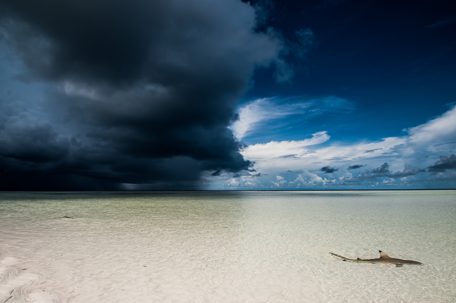 A blacktip shark cruises the lagoon as a storm approaches in Aldabra Atoll, Seychelles ©Adam Mitchell