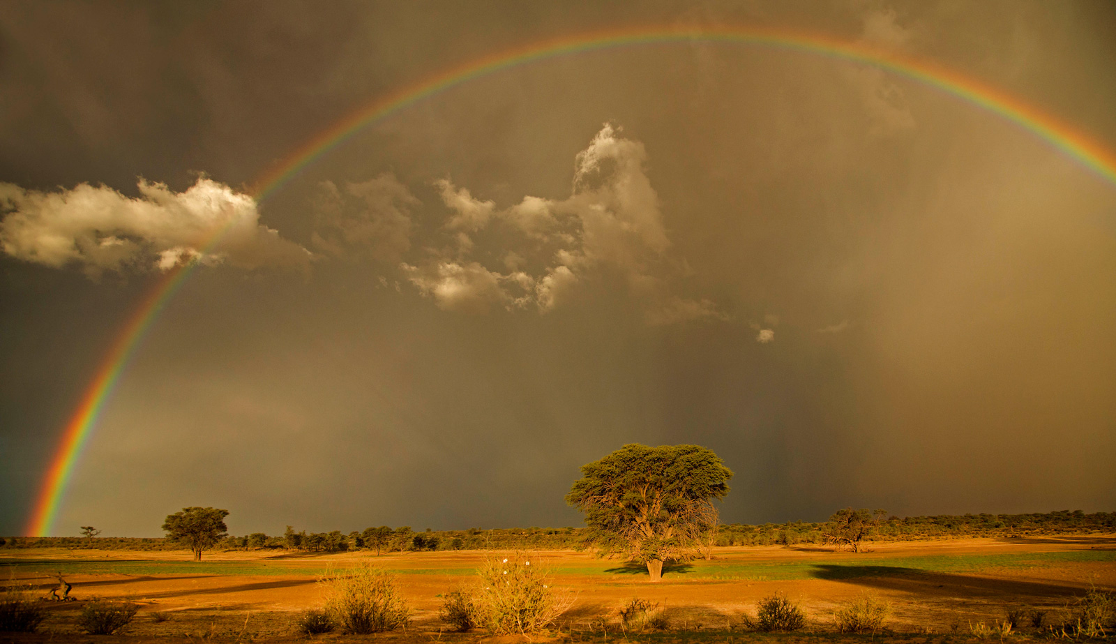 A rainbow appears after a storm near Nossob, Kgalagadi Transfrontier Park, South Africa ©Geo Jooste