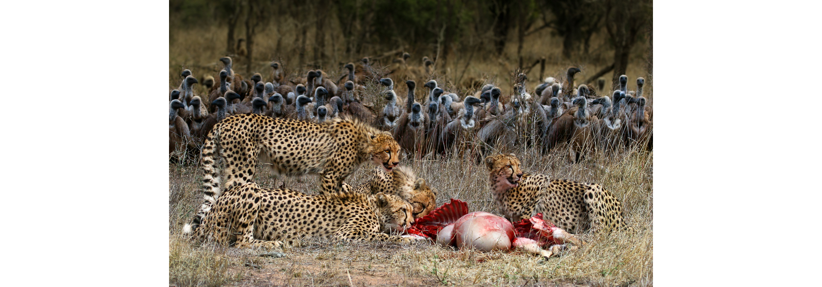 """The audience"" in Thornybush Nature Reserve ©Alex Dyason"