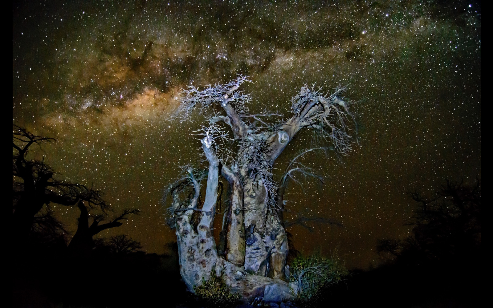 """Baobab night sky"" at Kubu Island in Makgadikgadi Pans National Park, Botswana © Dirk Theron"