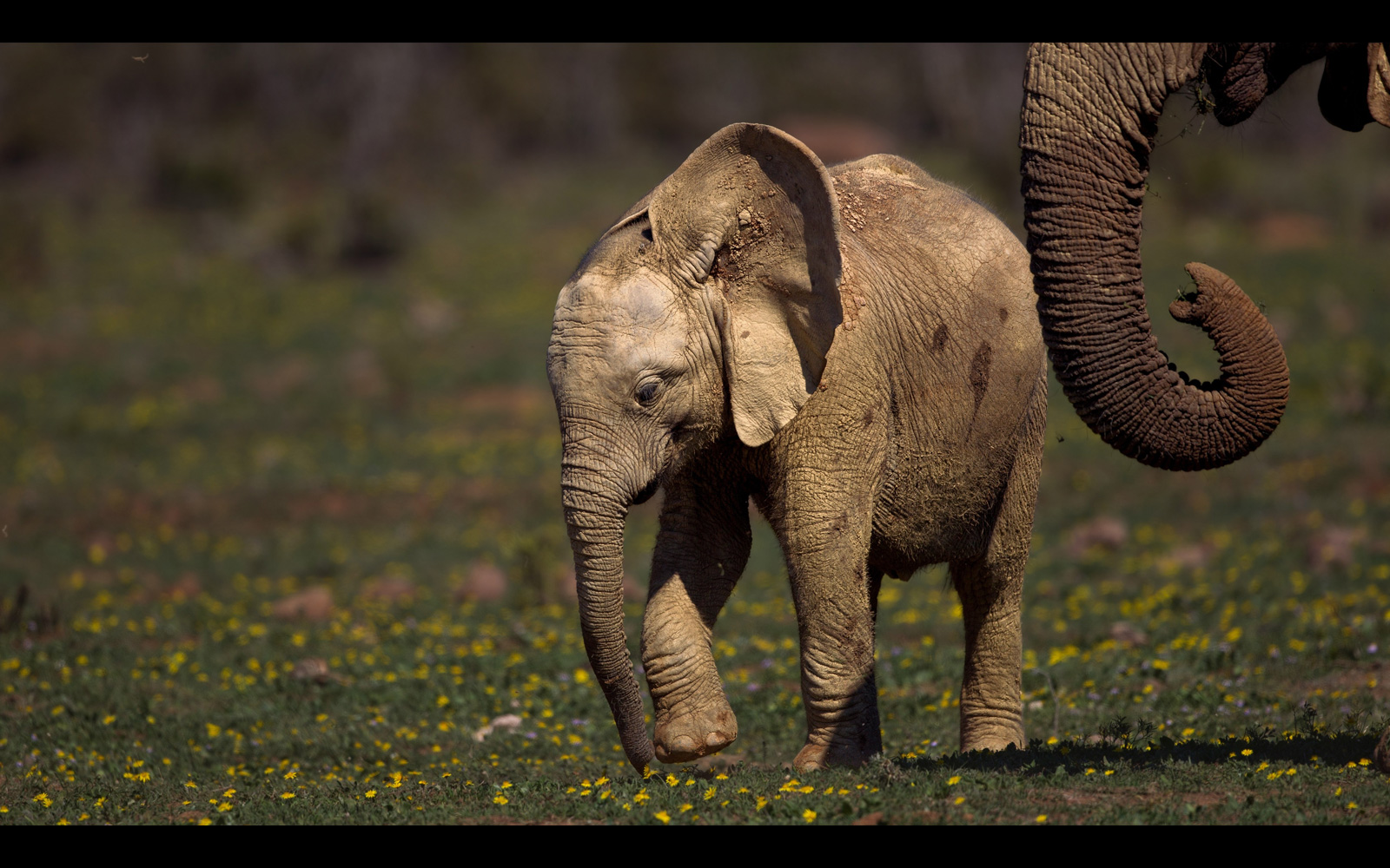 A baby elephant with its mother in Addo Elephant National Park, South Africa © Fanie Heymans