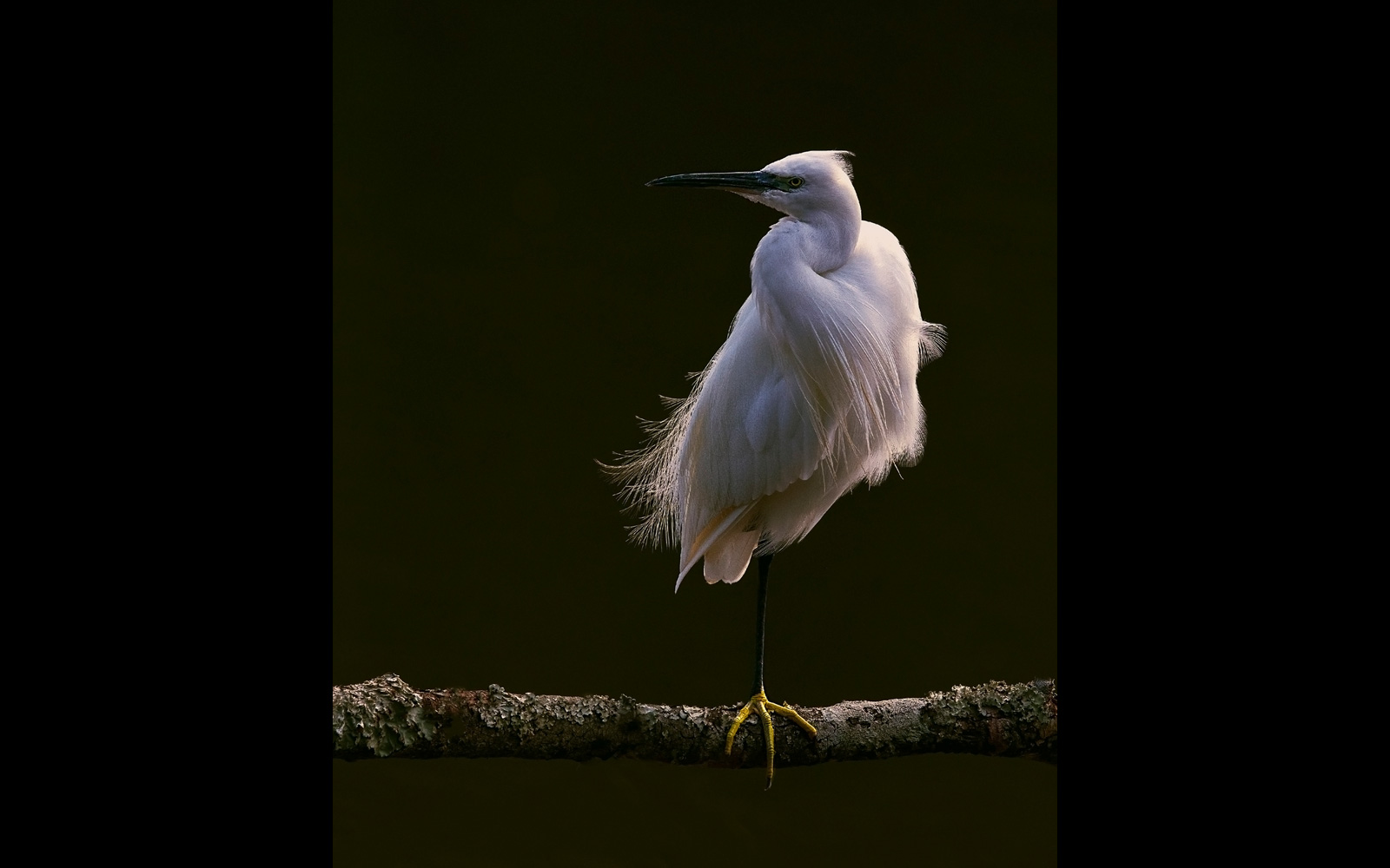 A little egret in Umkhobi Lagoon, KwaZulu-Natal, South Africa © Jacques Sellschop