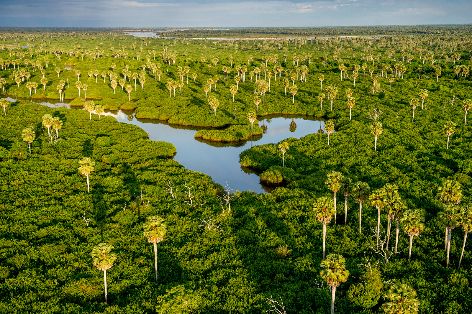Stately Borassus palms rise from the swamps between the Rufiji River and the northern lakes.
