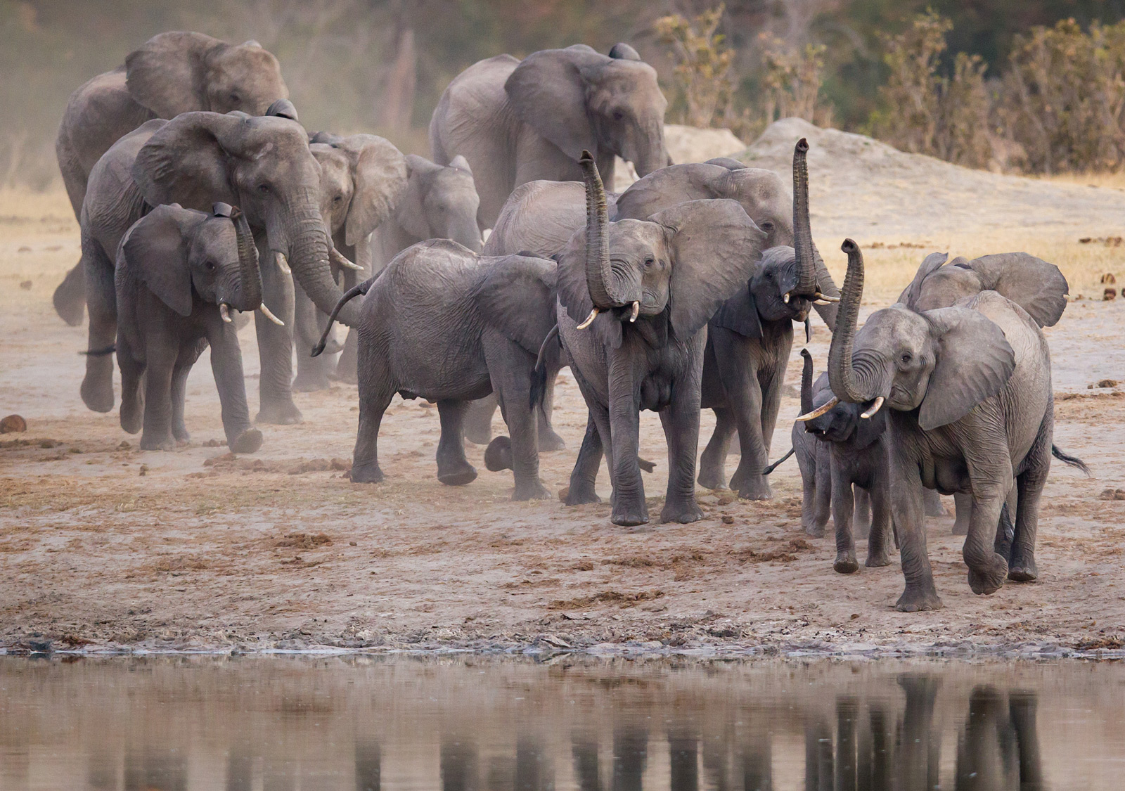"Elephants galore in Hwange National Park ©<a href=""http://www.burrard-lucas.com"" target=""_blank"" class=""track"">Will Burrard-Lucas</a>"