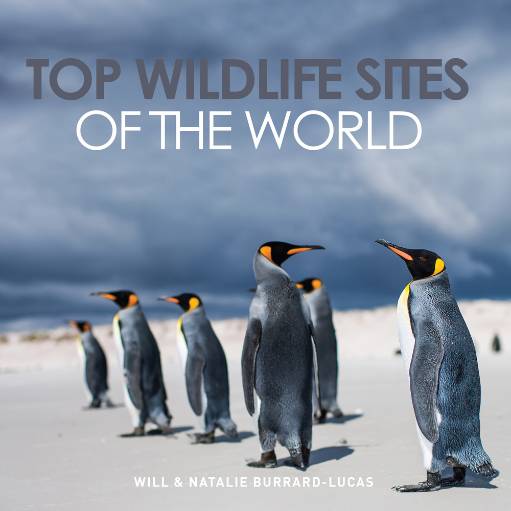 "<a href=""http://www.topwildlifesites.com/"" target=""_blank"" class=""track"">Top Wildlife Sites of the World</a> by Will Burrard-Lucas"