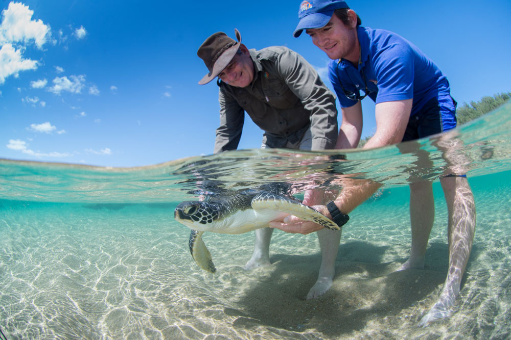 "In November 2016<a href=""http://africageographic.com/blog/isimangaliso-moving-release-two-rehabilitated-turtles/"" target=""_blank"">, two rehabilitated green turtles</a>, nicknamed Mel and Grotto, were released at Mabibi by park CEO Andrew Zaloumis and senior aquarist Robert Kyle from <a href=""http://www.seaworld.org.za/saambr"" target=""_blank"">SAAMBR</a>© <a href=""http://fionaayerst.me/"" target=""_blank"">Fiona Ayerst</a>"