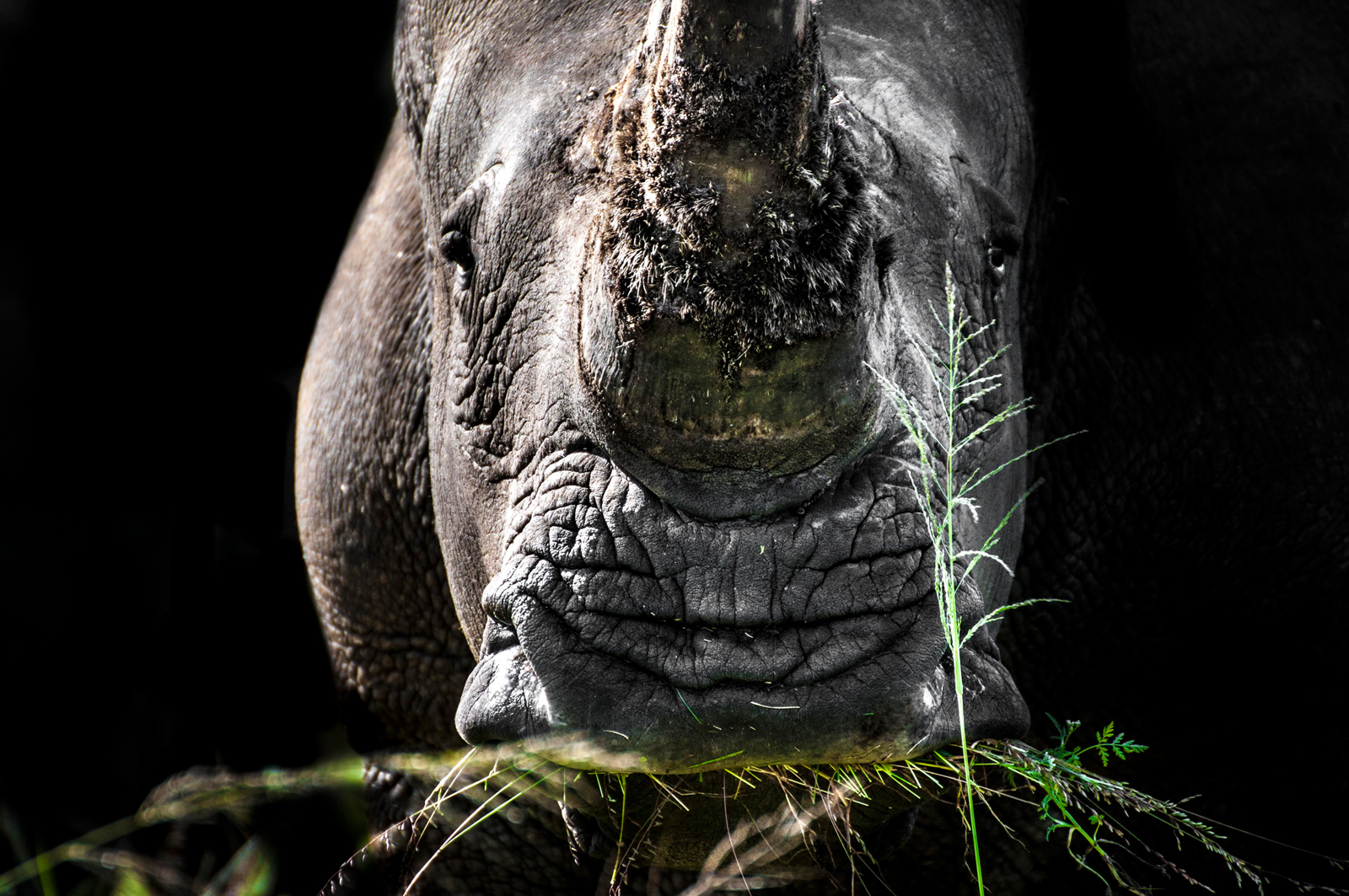 Greener pastures for a rhino ©Mark Winckler