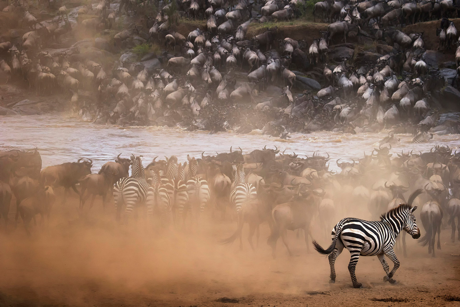 Chaos ensues during the great migration in the Maasai Mara National Reserve, Kenya ©Panos Laskarakis