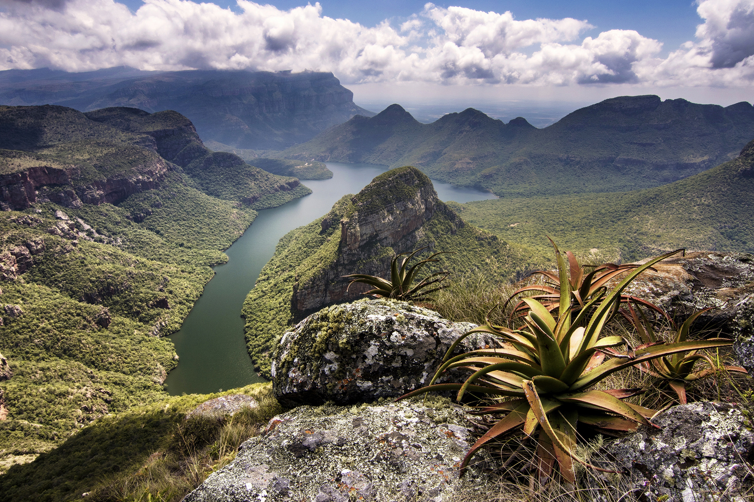 Aloes at the top of Blyde River Canyon in Mpumalanga, South Africa ©Des Jacobs
