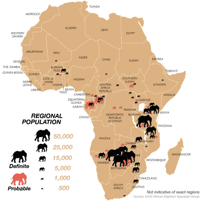 an overview of the story of elephant makoua in africa Africa's rapid urbanization', africa research  65 bbc world service, 'the story of africa independence case study: congo', available.