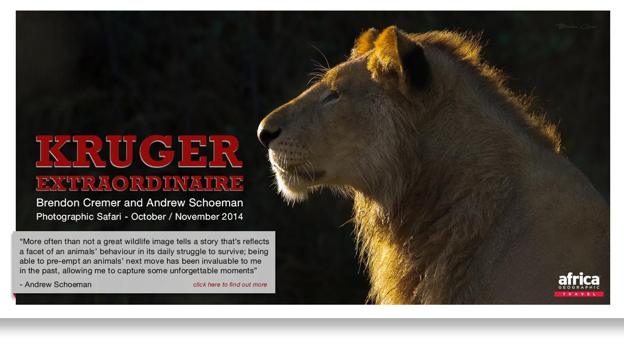 MSA_Mag_Kruger final Ad