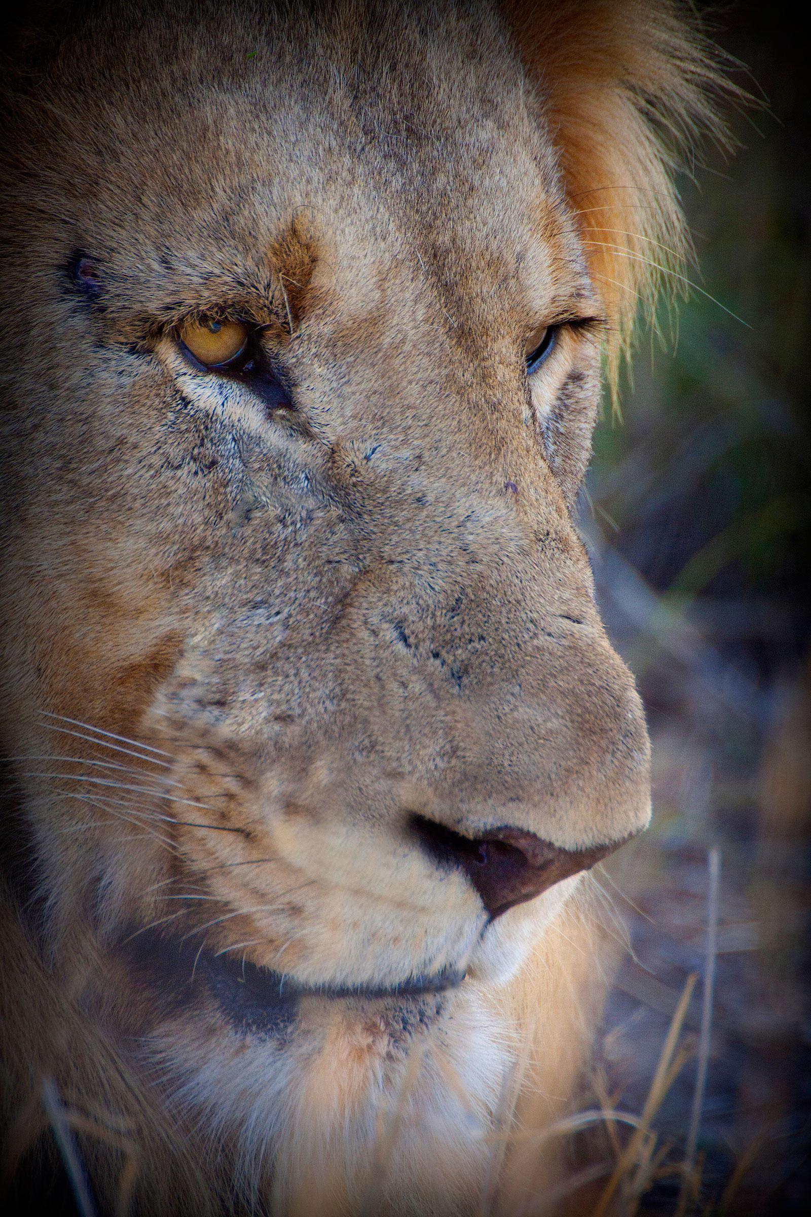 Mike-Visagie-Lions2