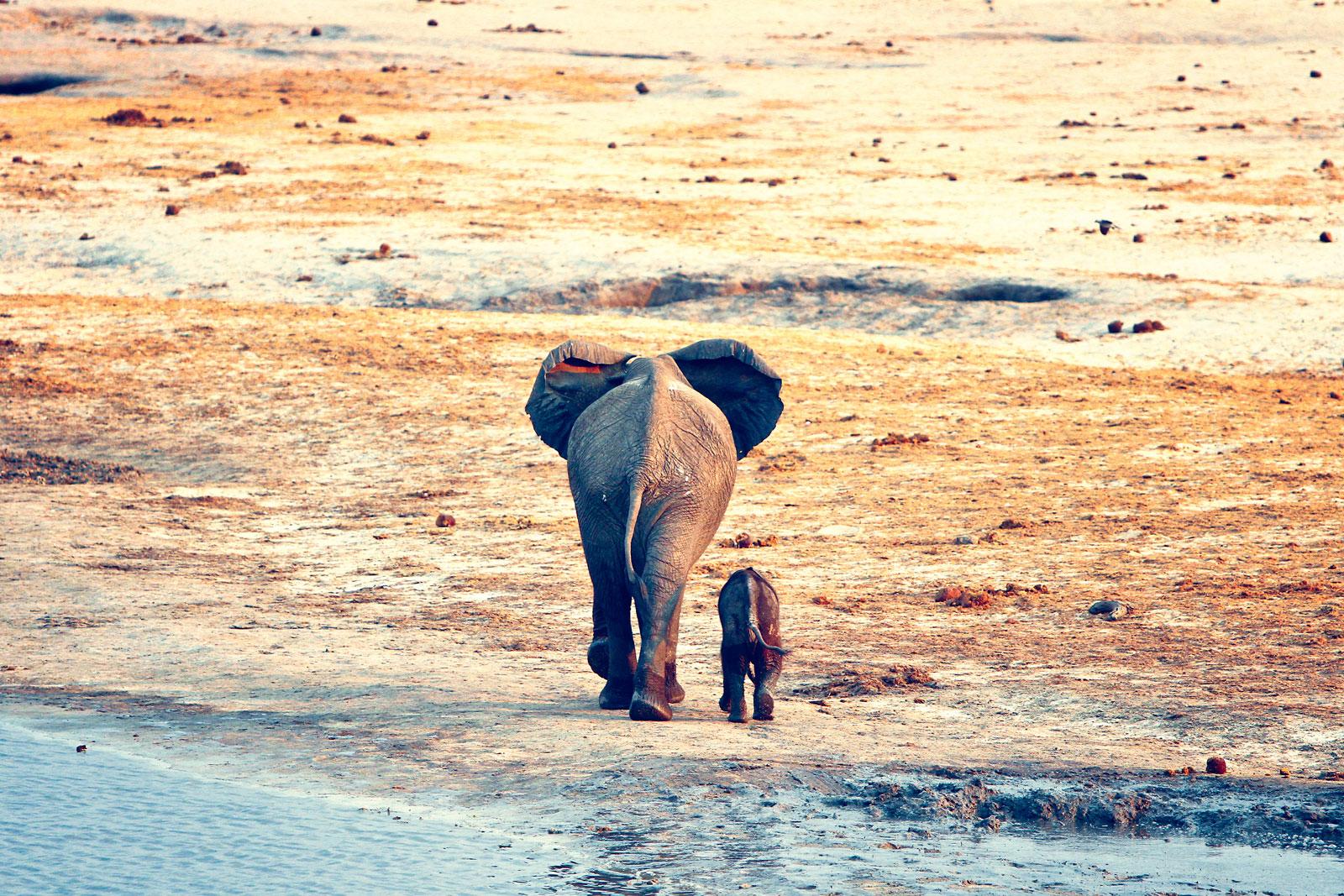 world-elephant-day-ARTUR-CABRAL