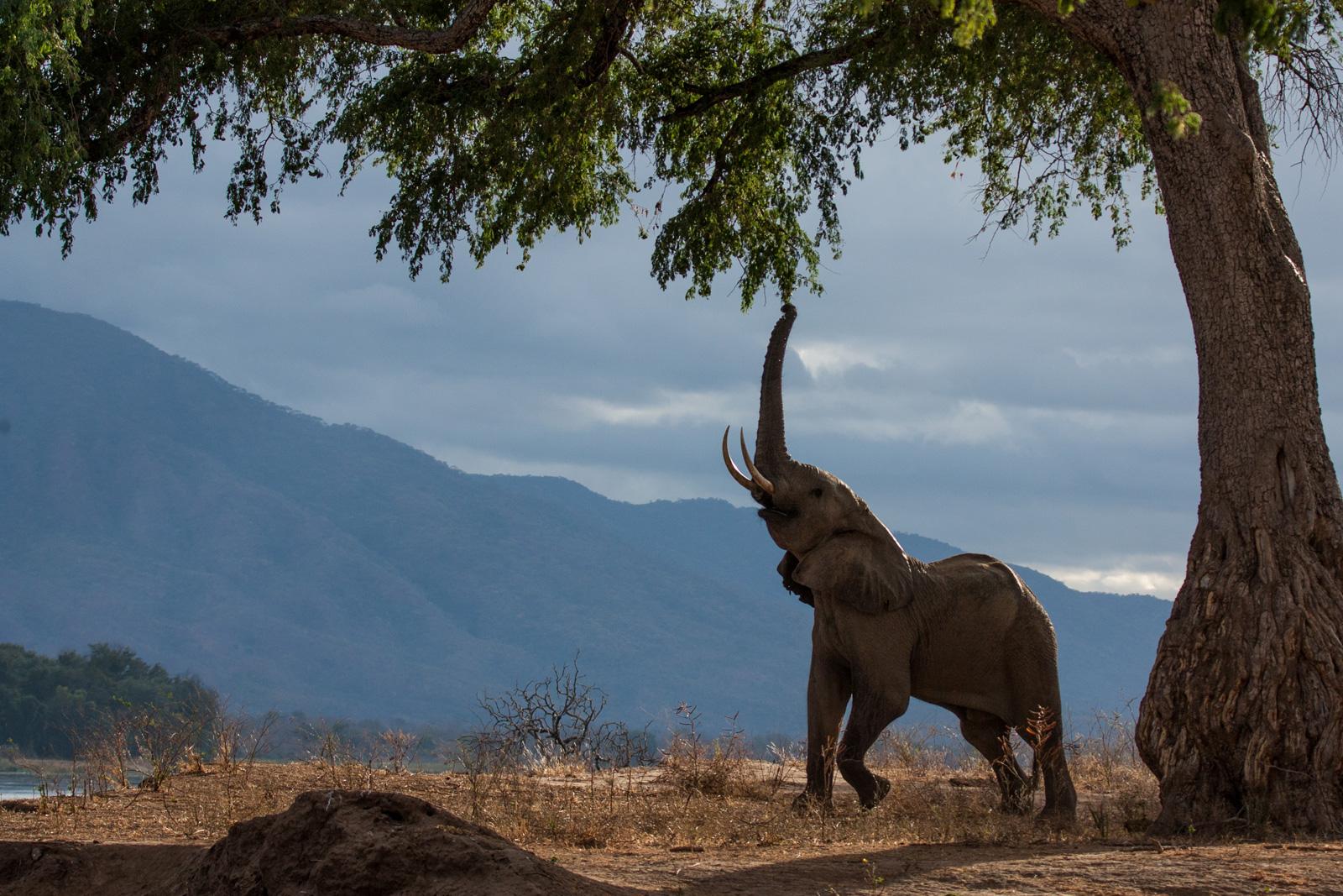 world-elephant-day-Bianca-Preusker