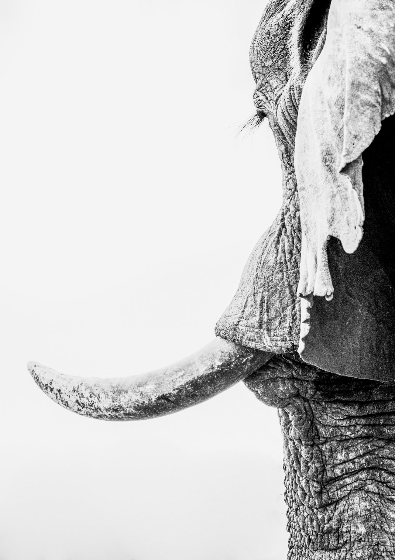 world-elephant-day-Corlette-Wessels