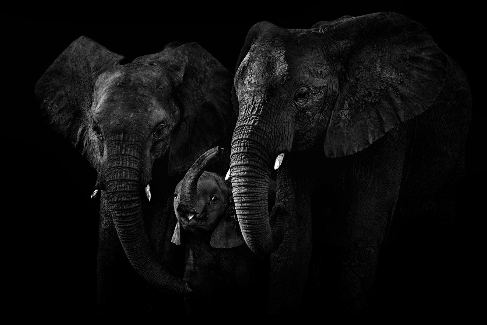 world-elephant-day-Ed-Hetherington