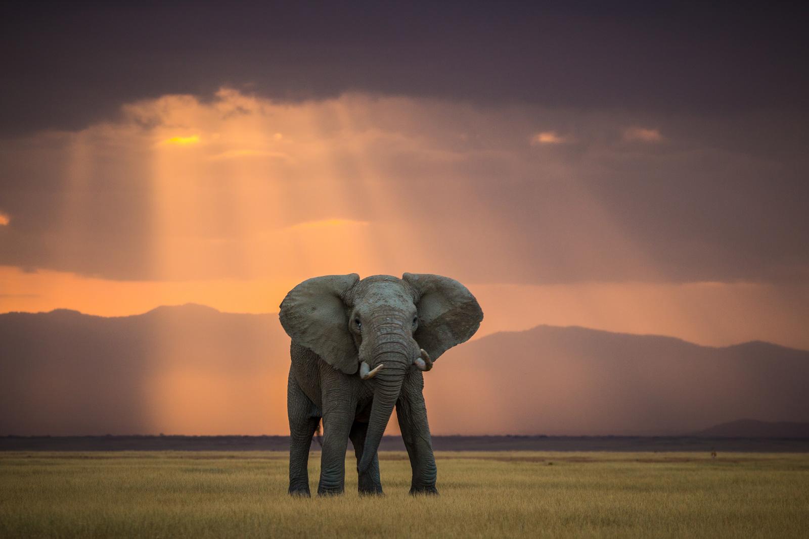 world-elephant-day-Pieter-jacobus-ras
