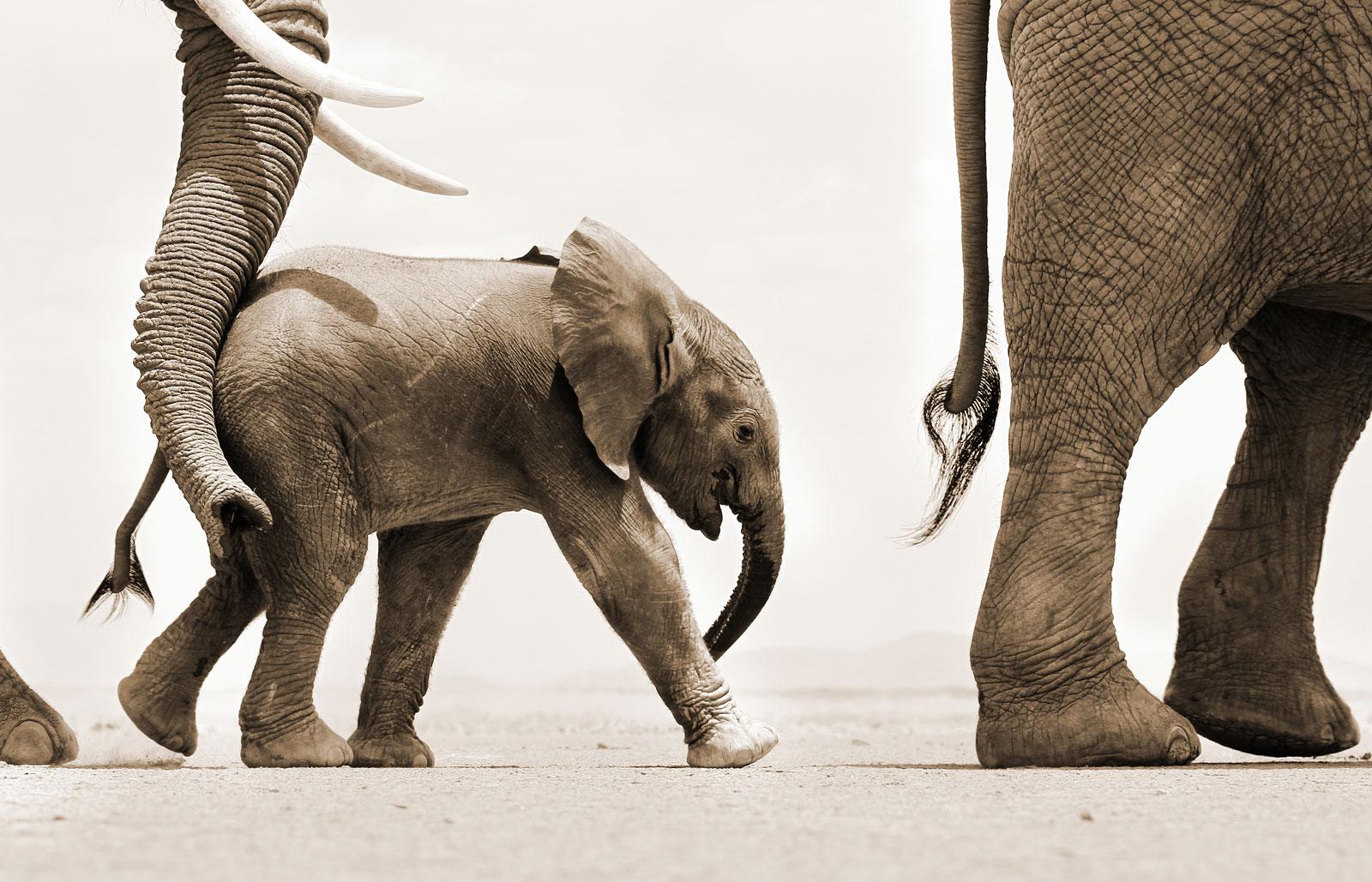world-elephant-day-sean-dundas