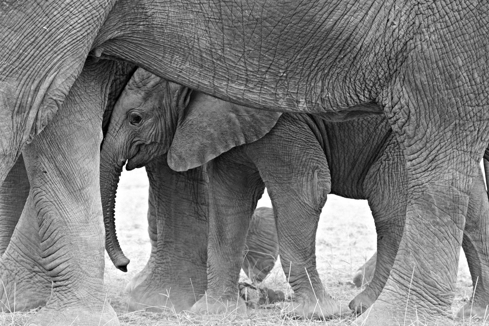 world-elephant-day-steve-catt