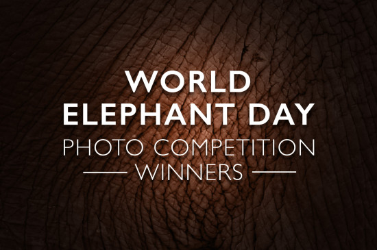 world-elephant-day-winners