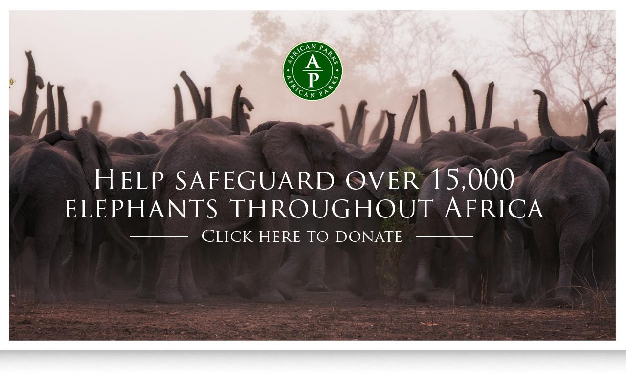AP instory ad - Elephants