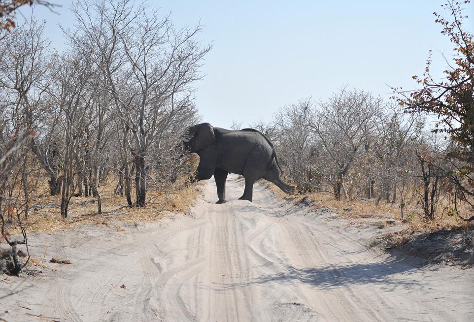 Botswana-(18)