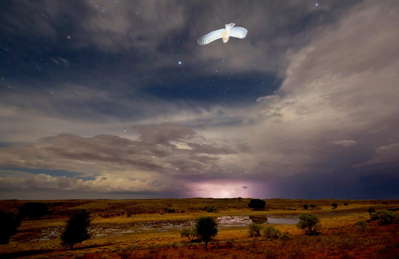 Hannes-Lochner-Kalahari-barn-owl