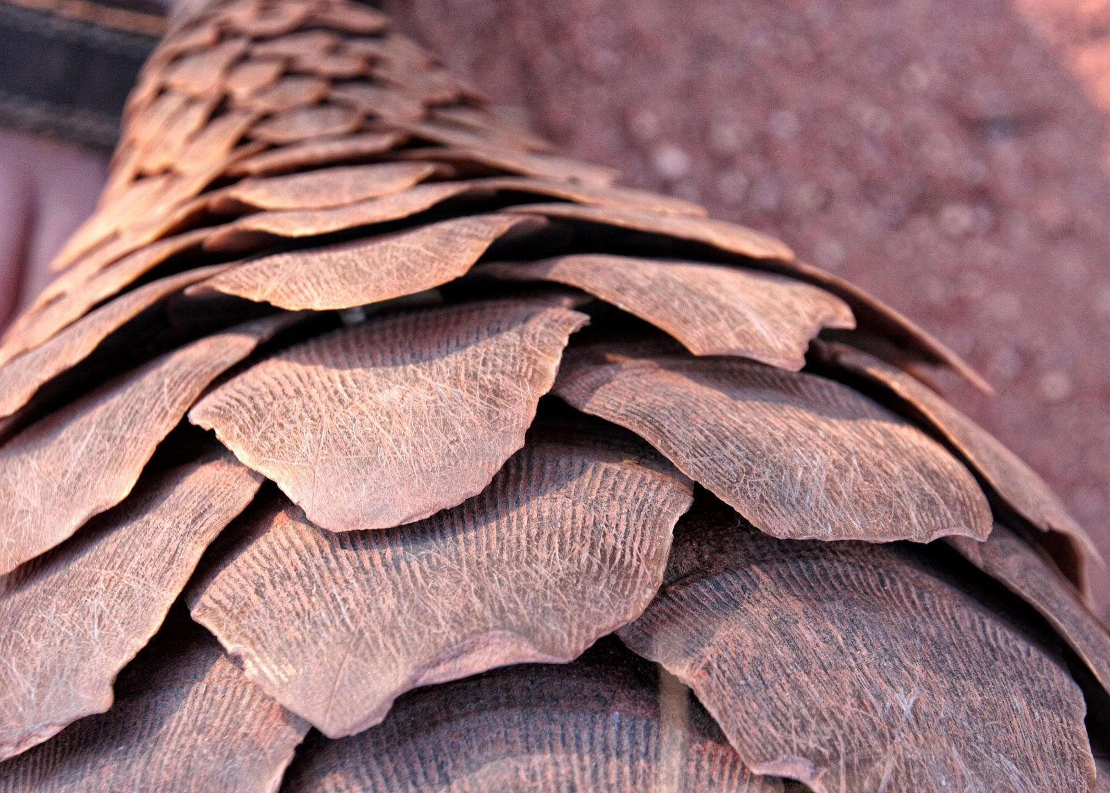 Scott-hurd-pangolin-scales.jpg