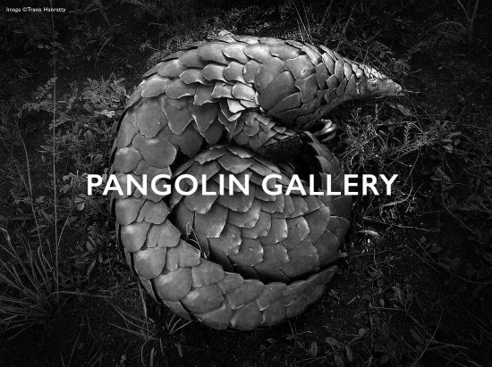 Travis-Hanratty-pangolin-gallery-header-2