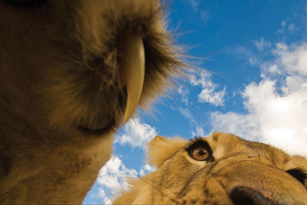 lion-claw-hannes-lochner