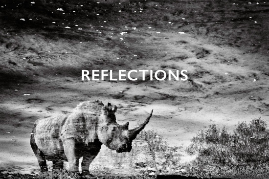 rhino-reflections