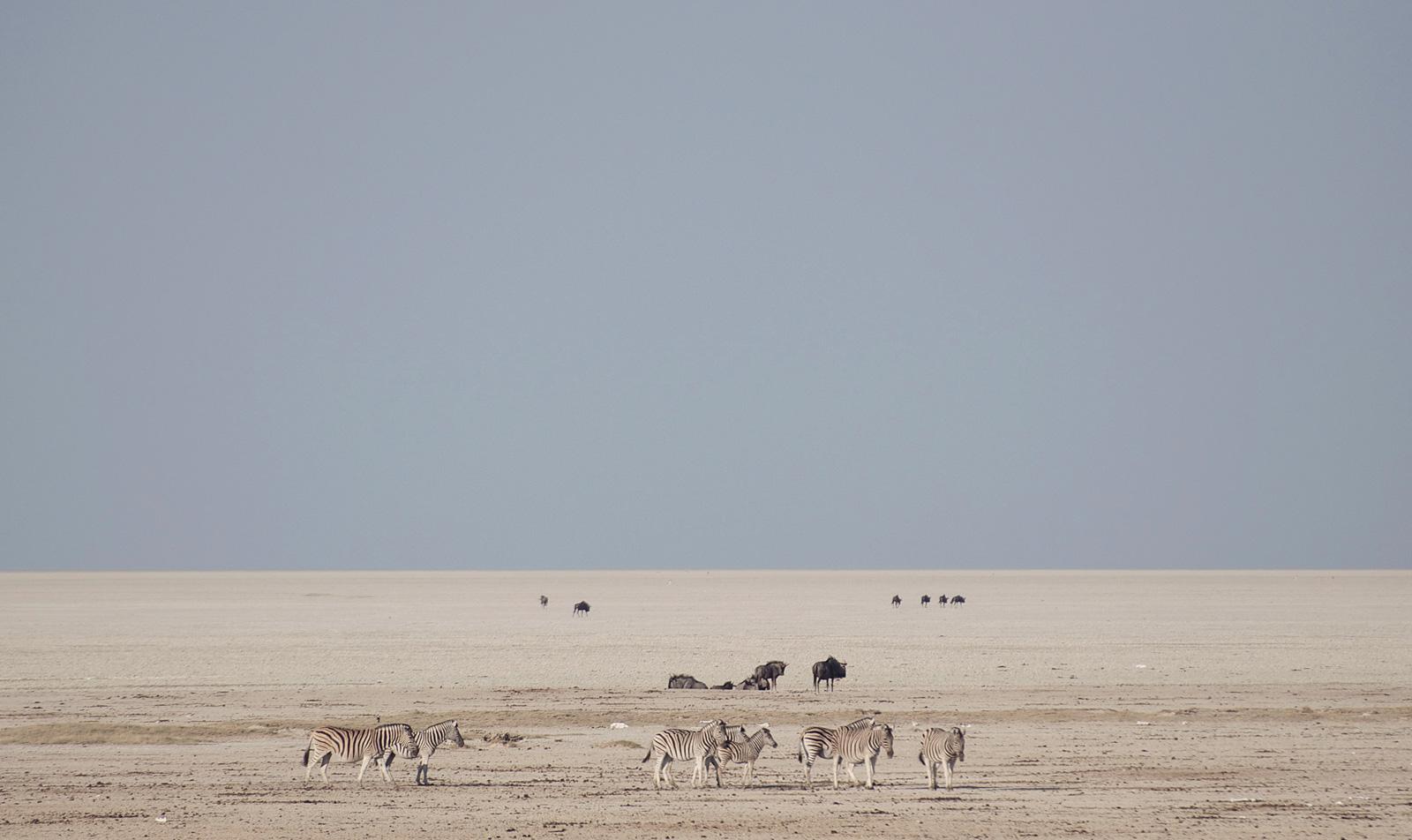African-adventure-jeff-tyser-kerryn-lee-maggs-etosha