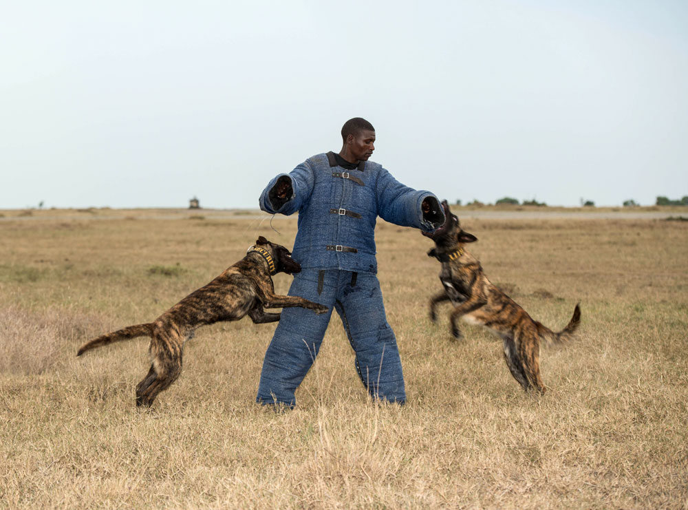 Best Dog Anti Flra