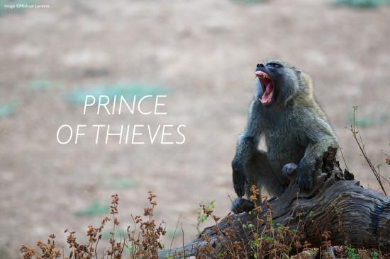 baboon-header-michael-lorentz