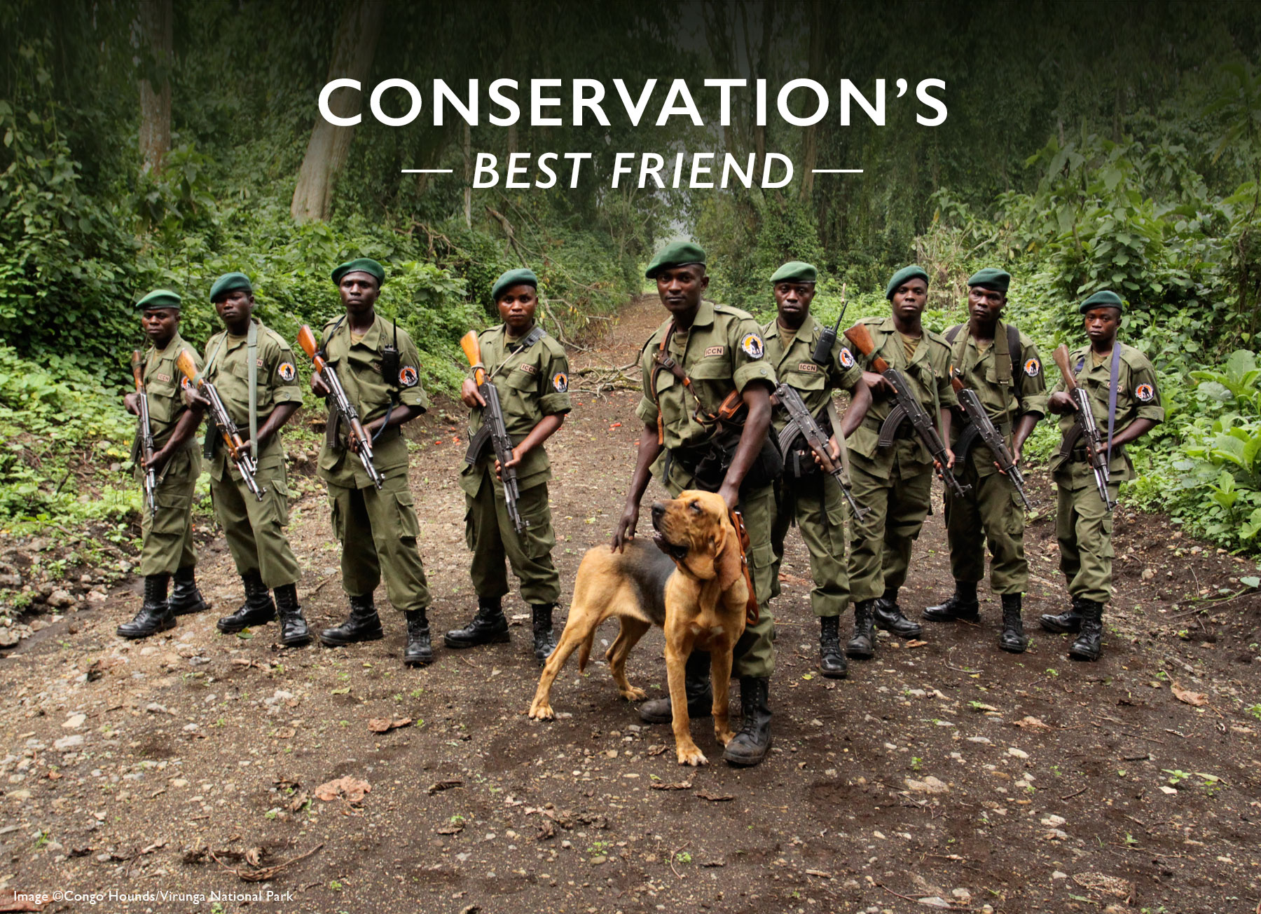 Conservation's Best Friend